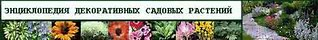 Энциклопедия декоративных садовых растений Ольги Цоппе